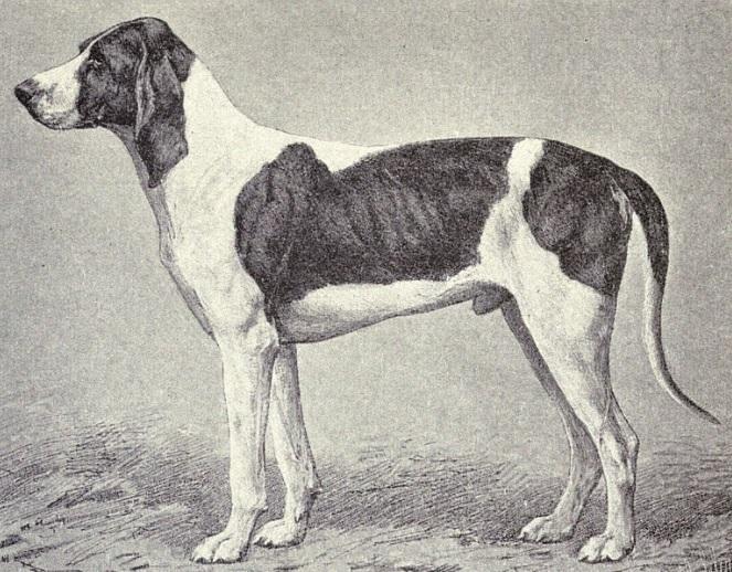 Billy Dog Breed