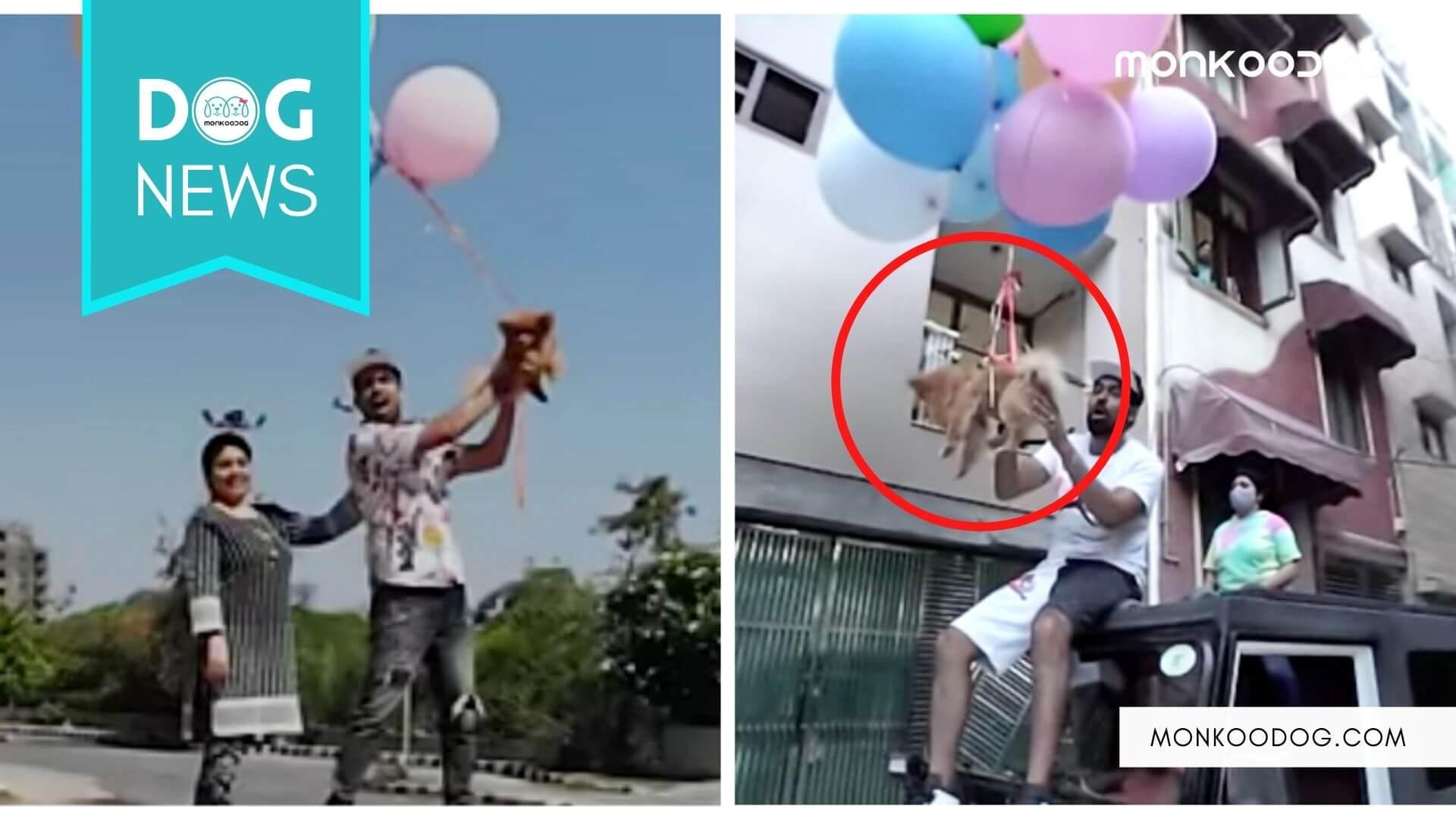 Delhi based Youtuber Gaurav Zone arrested for Flying his Dog with Hydrogen balloons