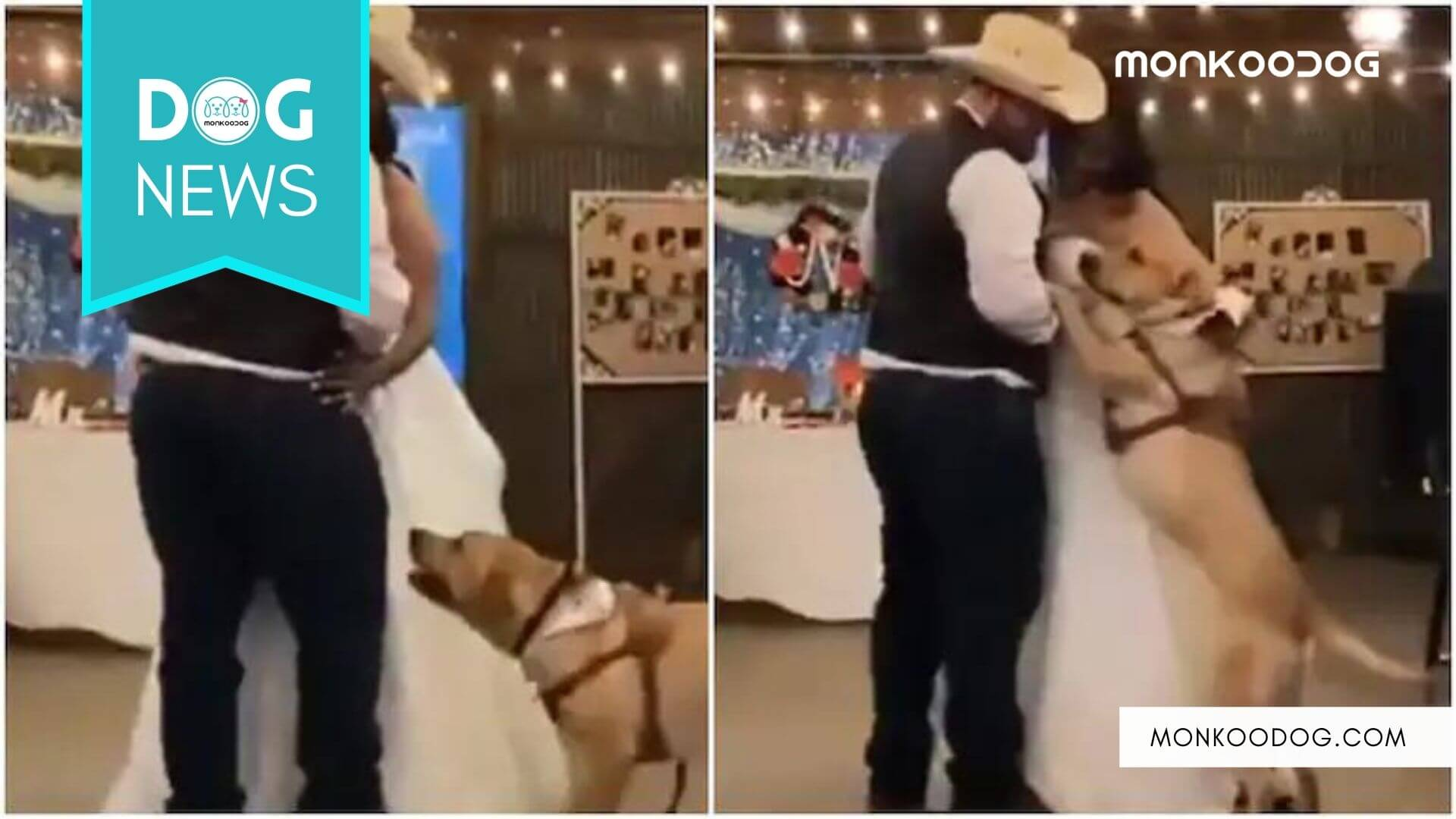 The Internet can't stop gushing over a viral dog dancing to Ed Sheeran's music during a wedding