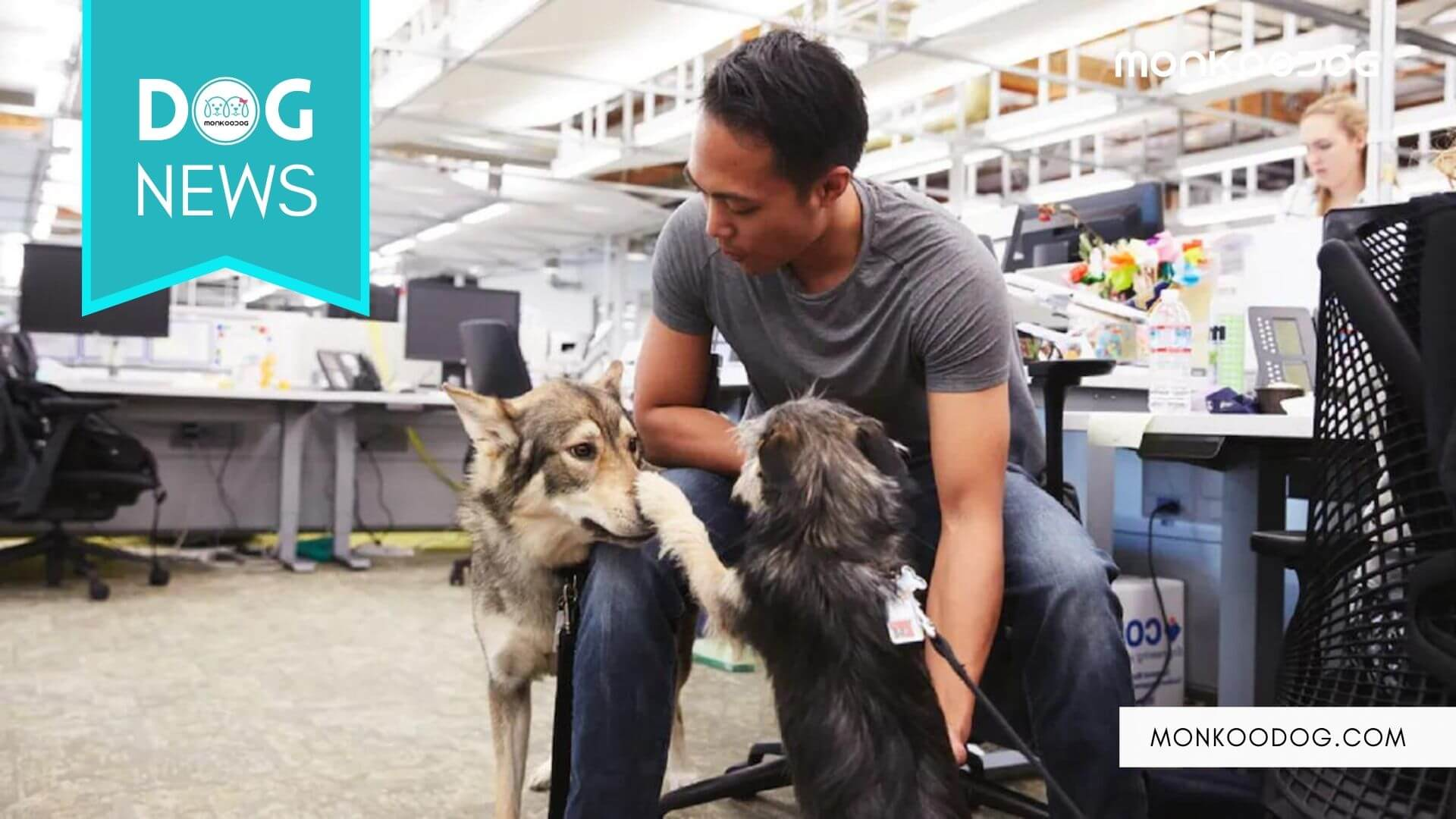 The world's most famous tech giant, Google officially claims the title of being the first 'Dog Company'