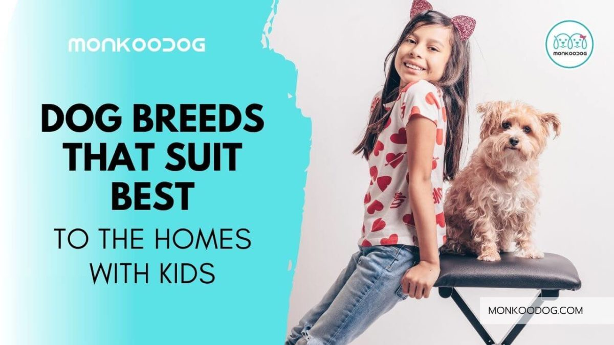 Top 10 Dog Breeds For Homes With Kids
