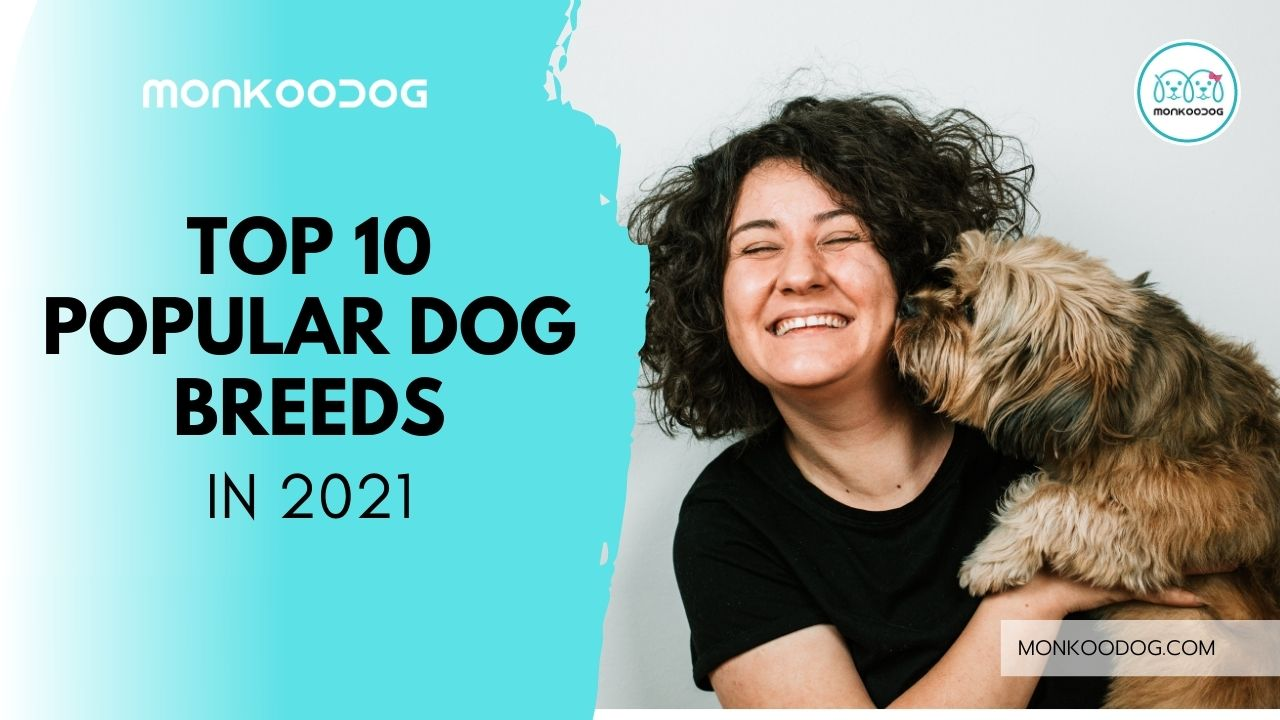Top 10 Popular Dog Breeds In The World