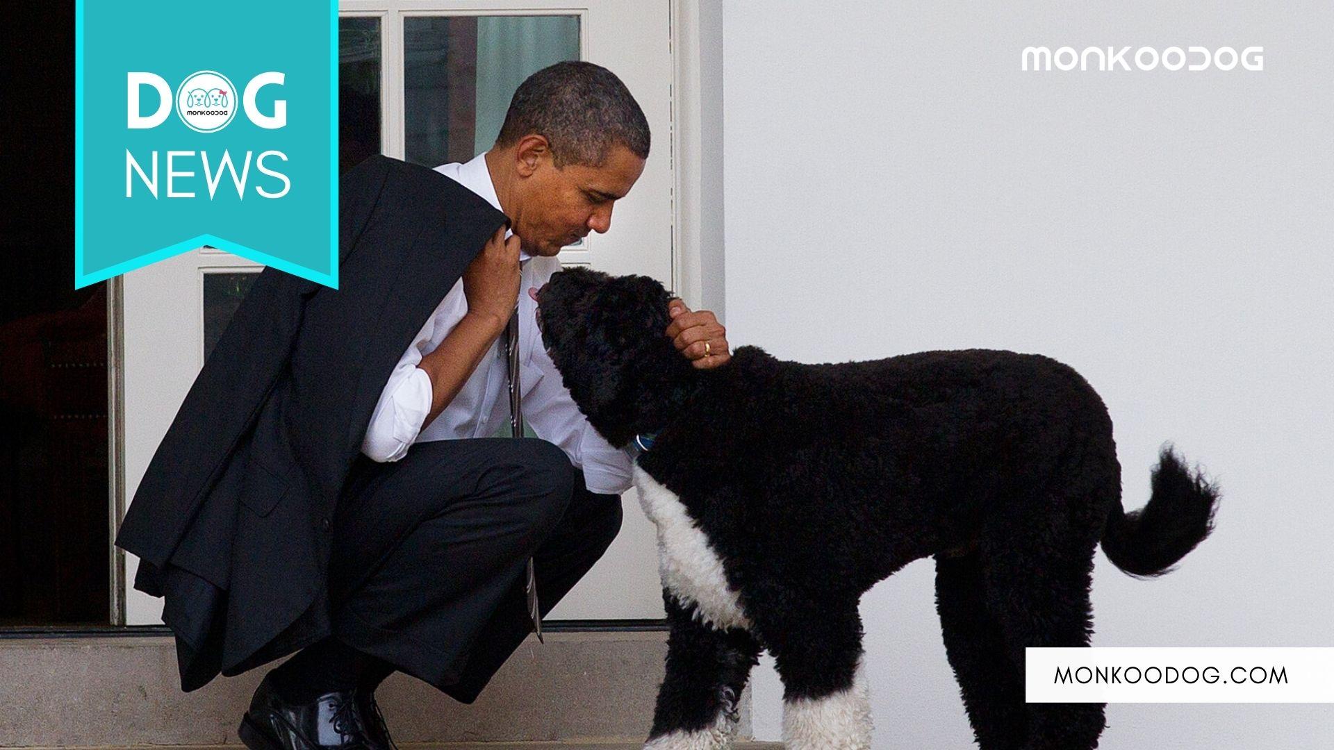 Tragedy At Former Us President Barack Obama's House; Pet Dog Bo Dies