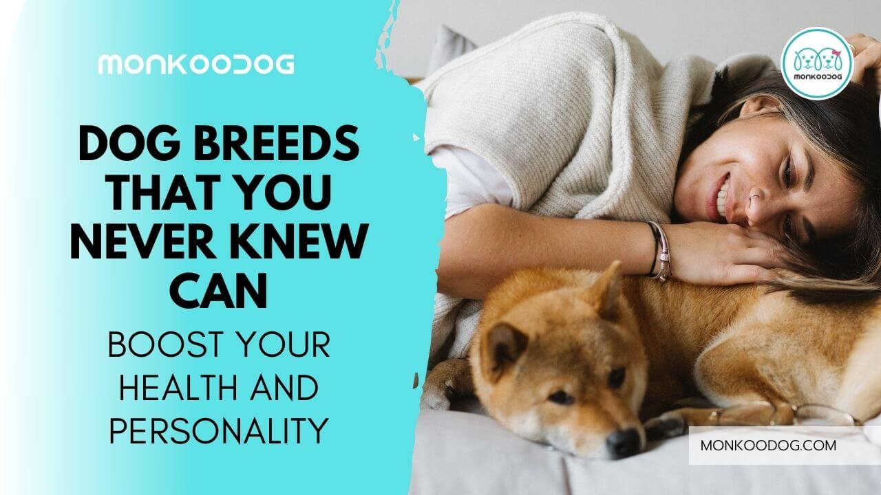 best dog breeds that can boost your health and personality