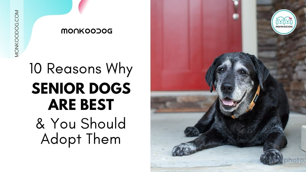 10 reasons why senior dogs are best and you should adopt them