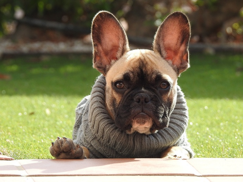 5 Situations When It Is Okay To Dress Up Your Dog