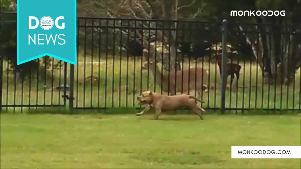 A dog and a Deer running together on opposite sides of a fence going viral on Twitter