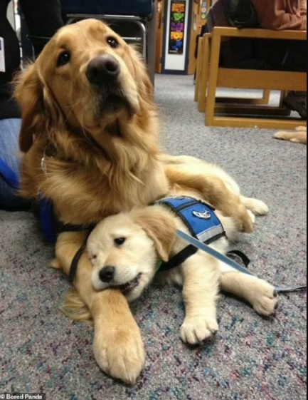 Adorable pictures of Mommy dogs 3