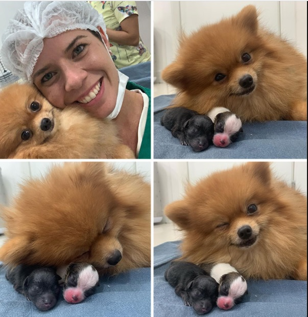 Adorable pictures of Mommy dogs 4
