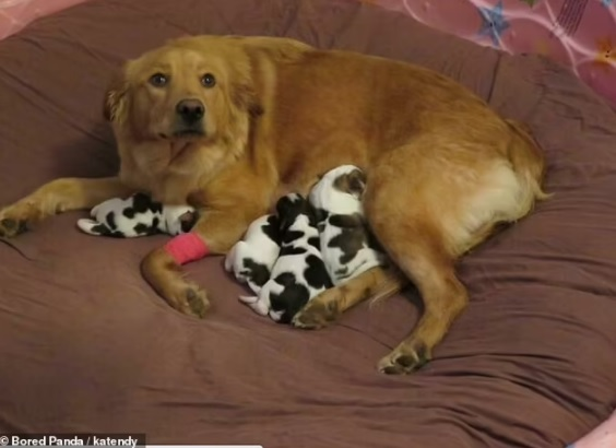 Adorable pictures of Mommy dogs 5