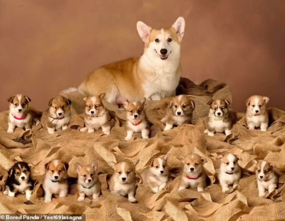 Adorable pictures of Mommy dogs 6