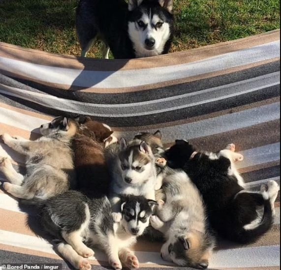 Adorable pictures of Mommy dogs
