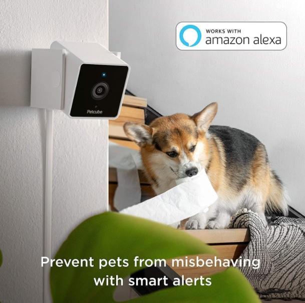 Cam Pet Monitoring Camera