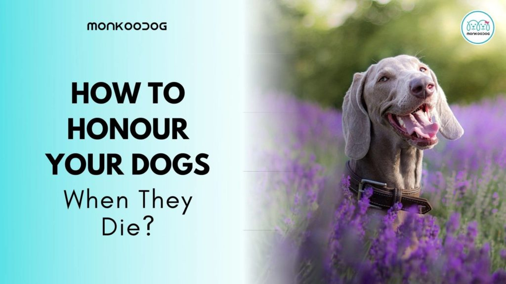 How to honour your pet when they die