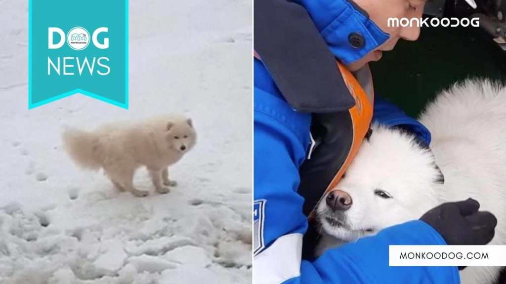 Sailors From Russia Rescue A Stranded Dog From Arctic Ice