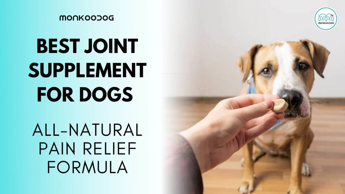 The Best Joint Supplements For Dogs: All Natural Pain Relief Formula