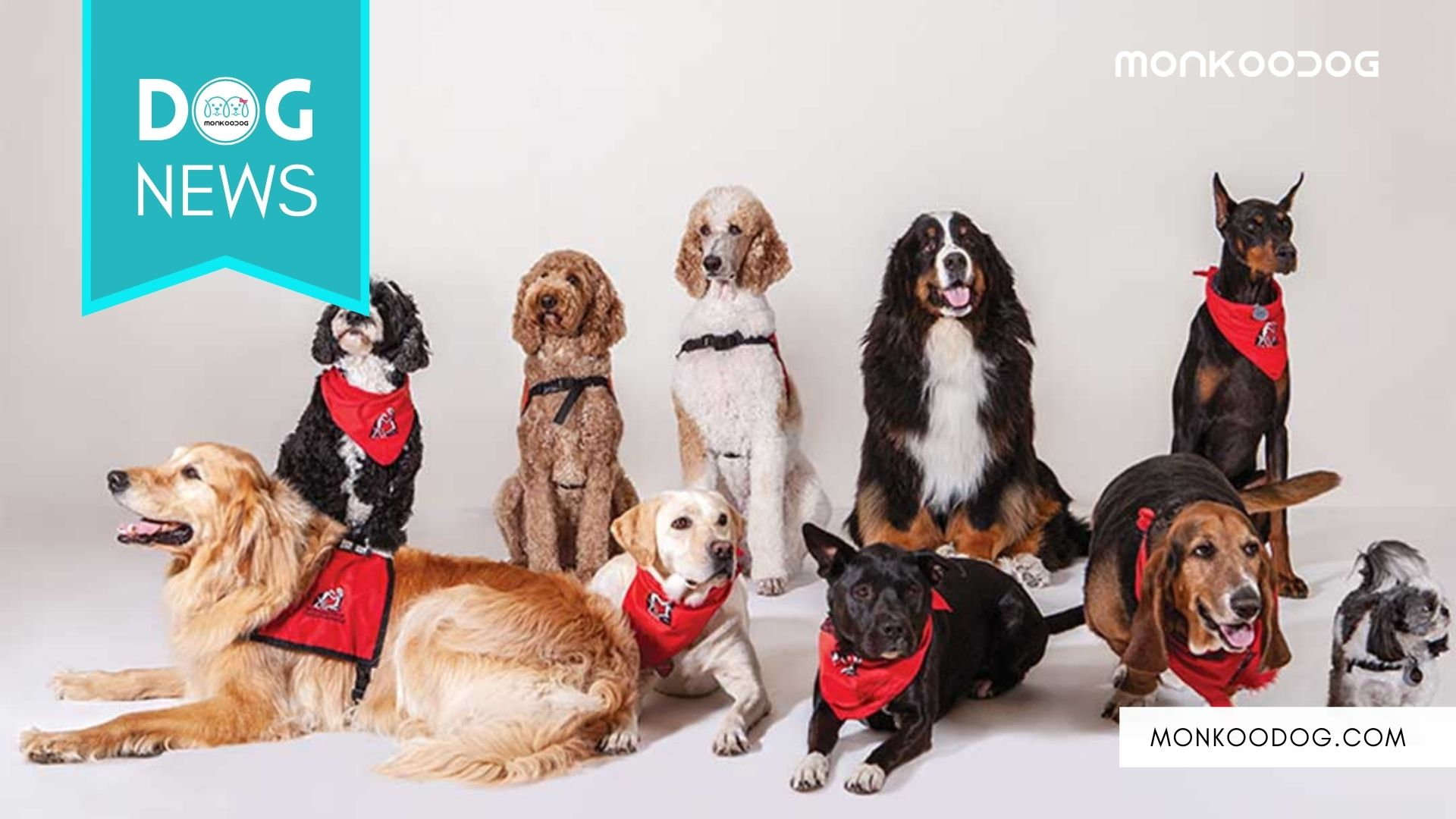 Therapy Dogs helping families of the missing by comforting them