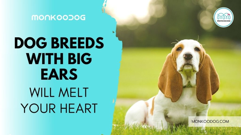 Top 10 Big-Eared Dogs That Will Melt Your Heart