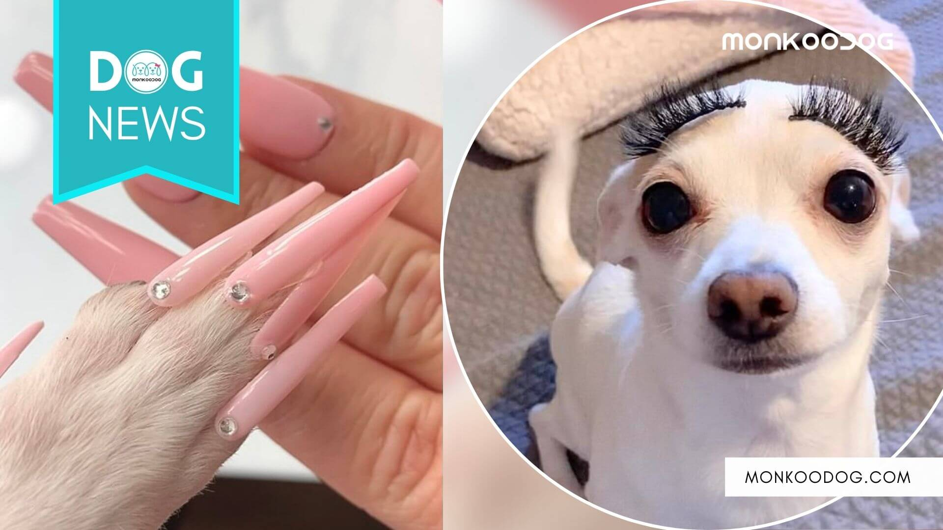 Woman Faces Animal Abuse Allegations Over Applying Fake Nails To Her Dog
