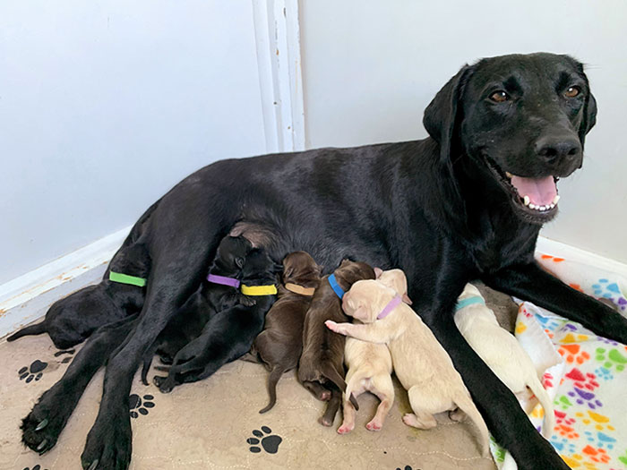 cute-dog-moms-with-puppies
