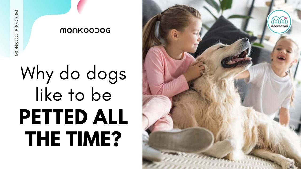 why do dogs like to be petted all the time