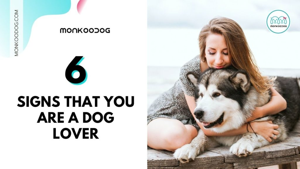 6 signs that you are a dog lover