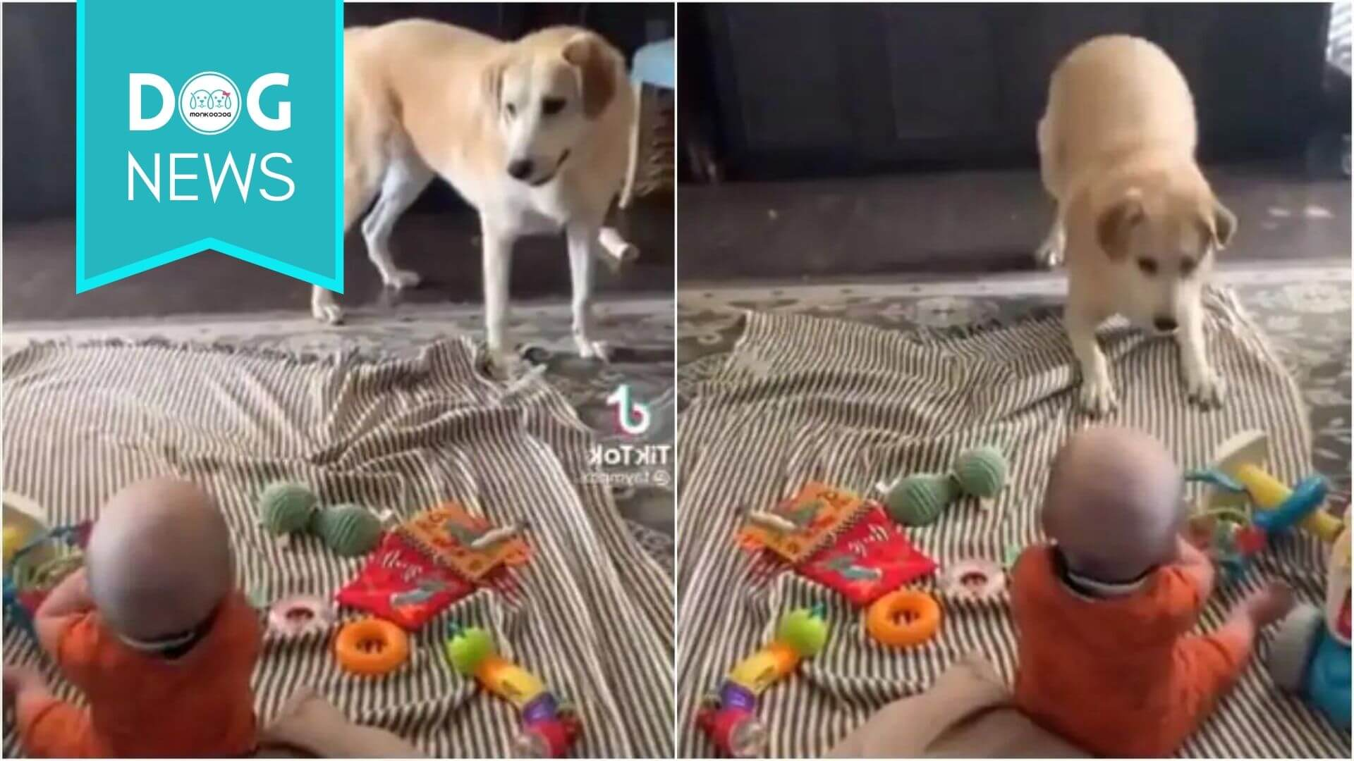 A viral video of a dog doing funny things to make toddler laugh will steal your heart