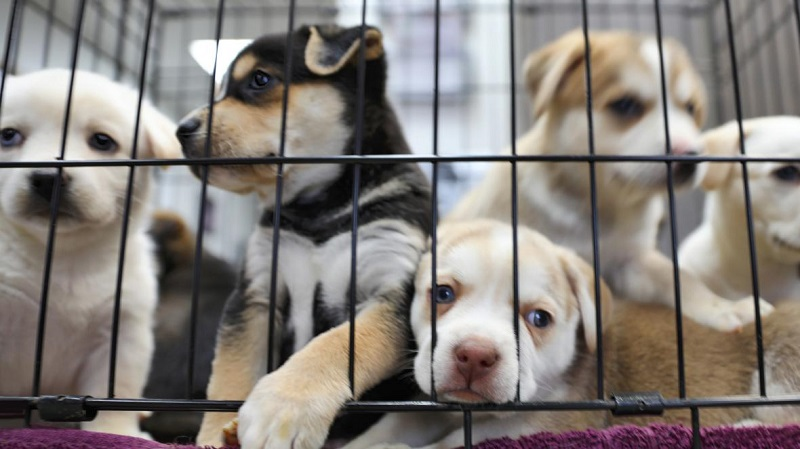 Dog Adoption And Sales
