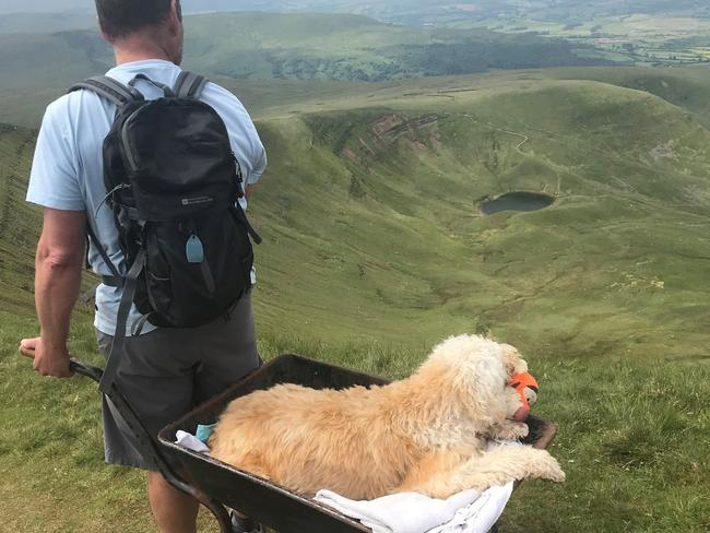 Dog Parent Takes His Dying Dog On Its Last Adventure