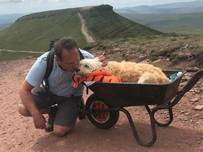 Dog Parent Takes His Dying Dog