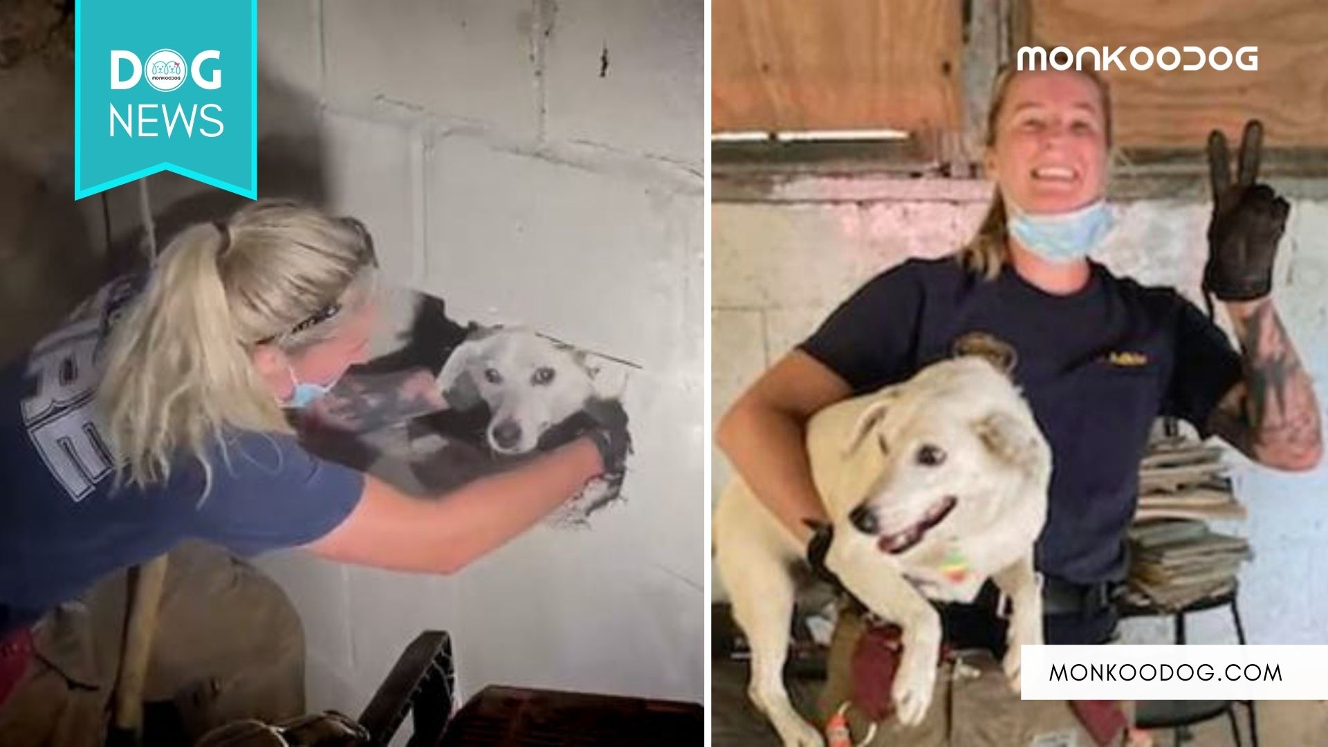 Dog missing for five days, Stuck in the wall rescued by the Firefighters!! Watch the heartwarming video of its rescue.