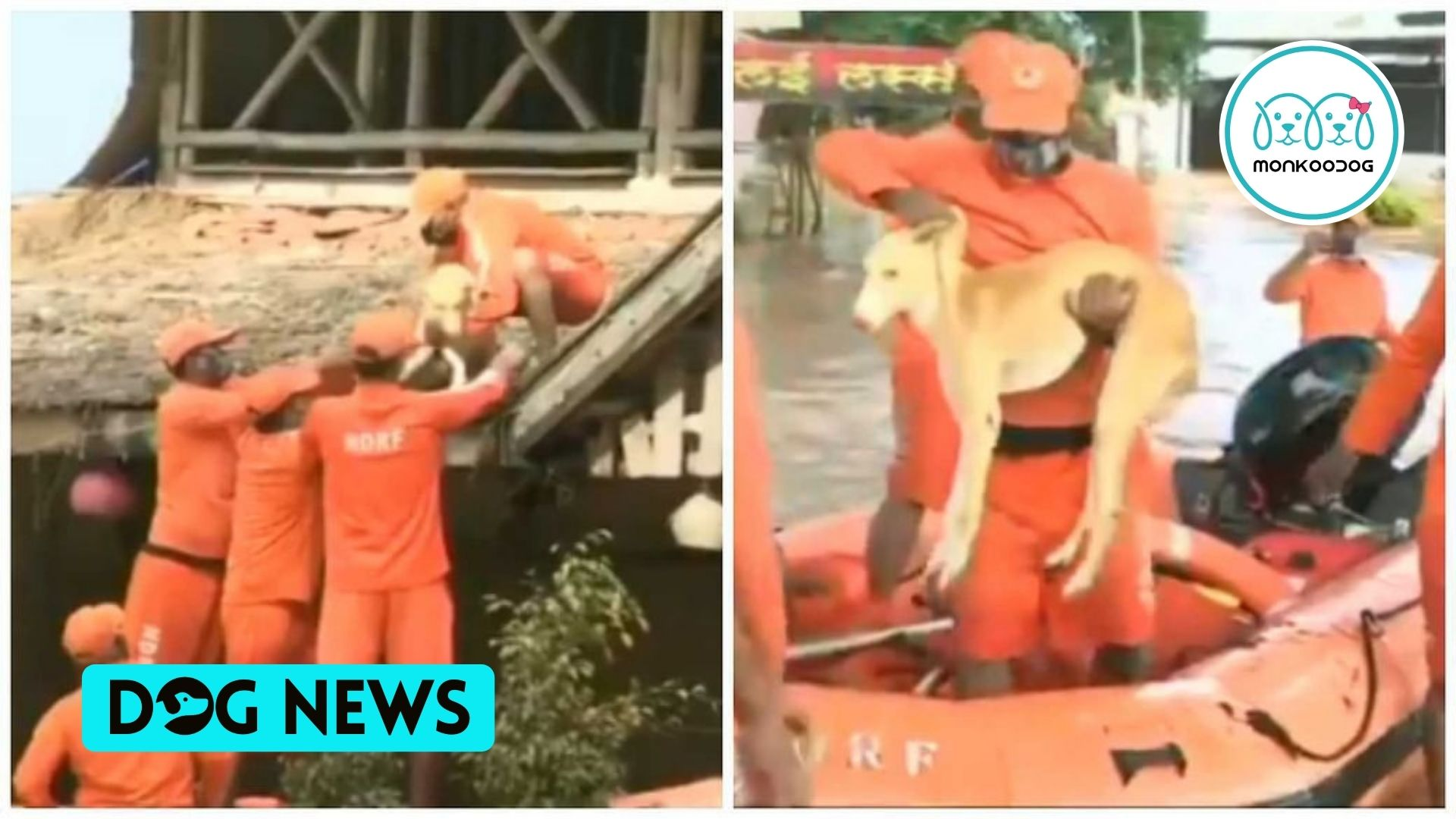 Dog saved by NDRF personnel from Maharashtra's destructive floodwaters. Watch the video.
