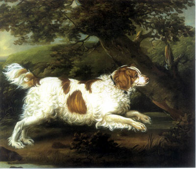 English Water Spaniel Dog Breed