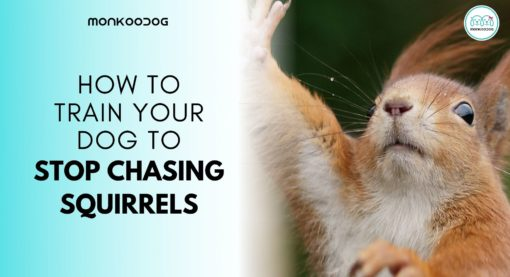 How to Train your Dog to Stop Chasing Squirrels