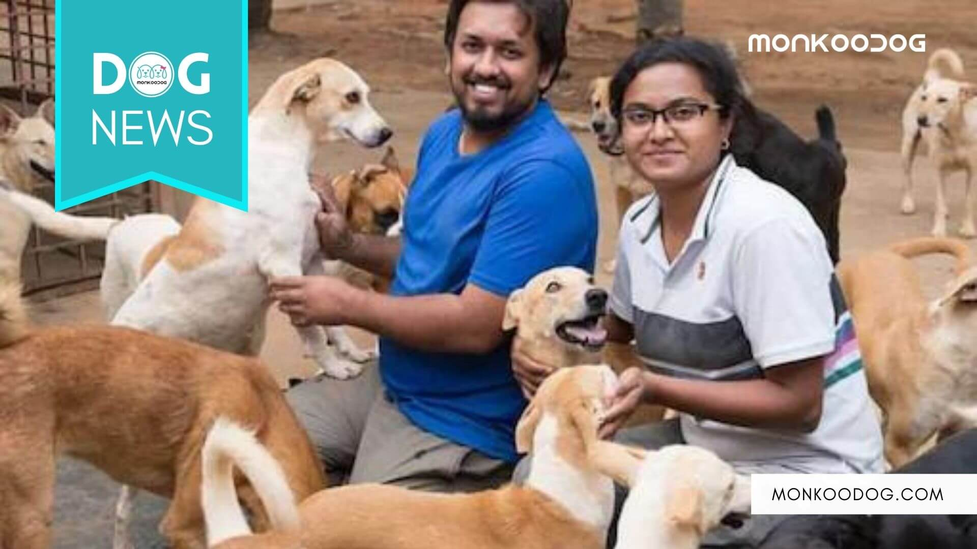 Man quits high paying corporate job to take care of street dogs in India