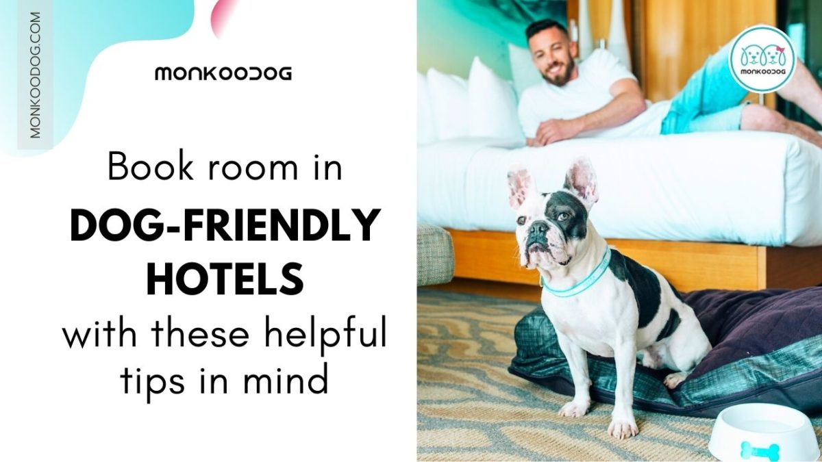 Tips for Staying in a Dog-Friendly Hotel