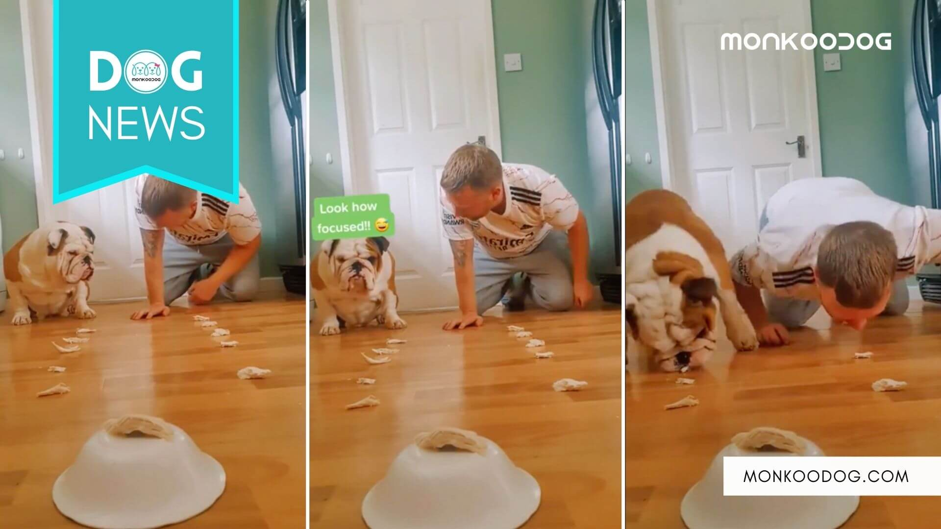 Trending Dog Video This Man Challenged his Bulldog to an eating competition.
