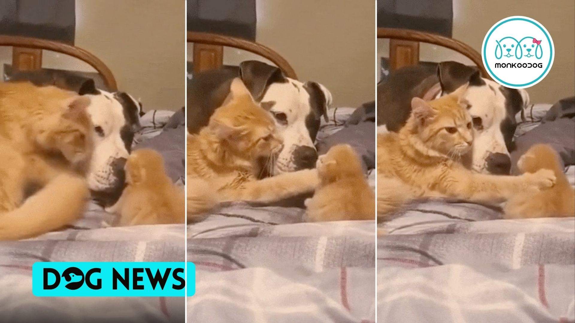 Watch Absolutely adorable video of Mom Cat introducing her kitten to a Dog friend!!