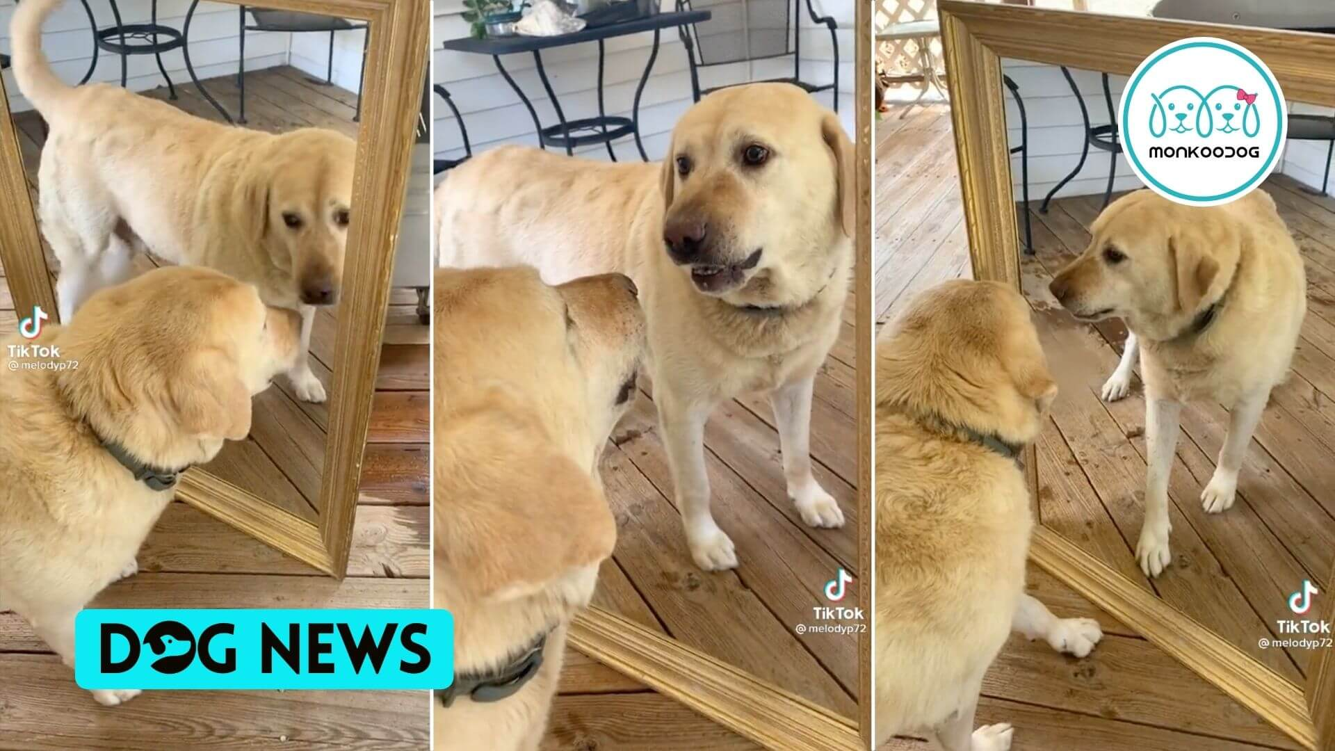 Watch Dog got confused why 'other' dog is giving him so much attitude