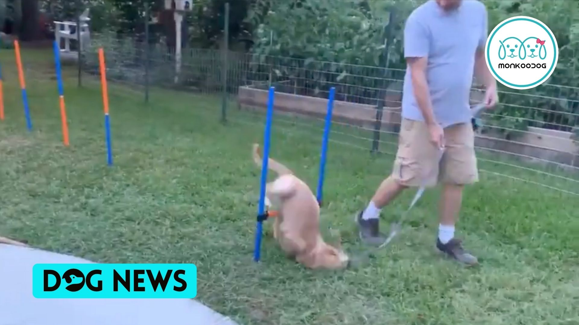 Watch How This Puppy Fails At Dog Obstacle Course In The Most Spectacular Way!