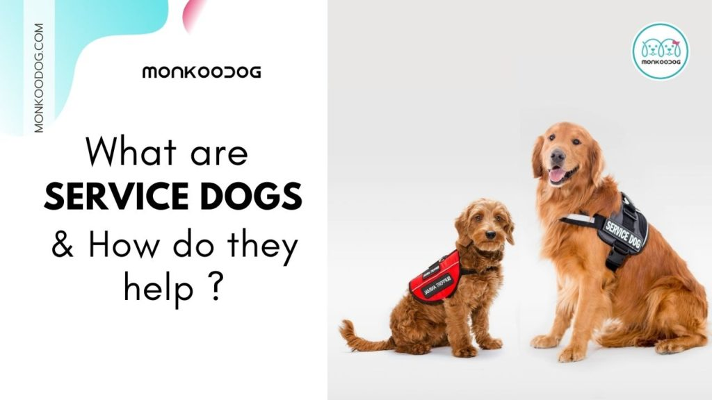 What Are Service Dogs And How Do They Help