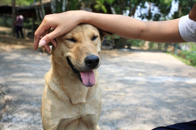 You cannot stop yourself from greeting dogs on the street