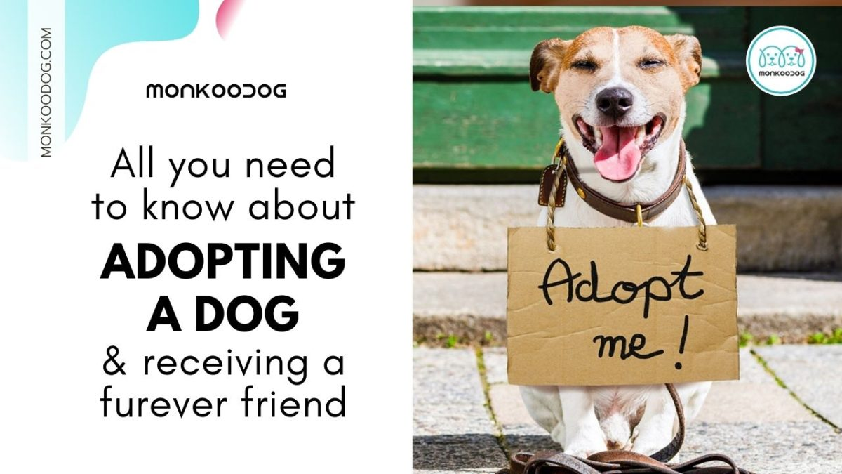 All you need to know about Adopting a dog and Receiving a Forever Friend