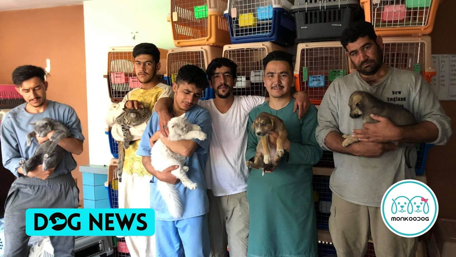 Animal Rescue Group in Kabul Is Racing To Secure Salvation for Hundreds Of Pets by Getting them Out Of Afghanistan, till Aug. 31