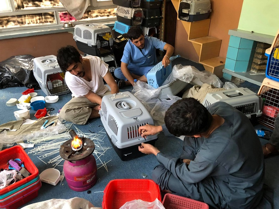 Animal Rescue Group in Kabul Racing To Secure Hundreds Of Pets