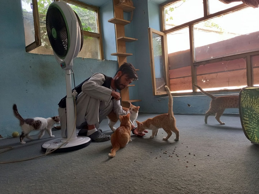 Animal Rescue Group in Kabul