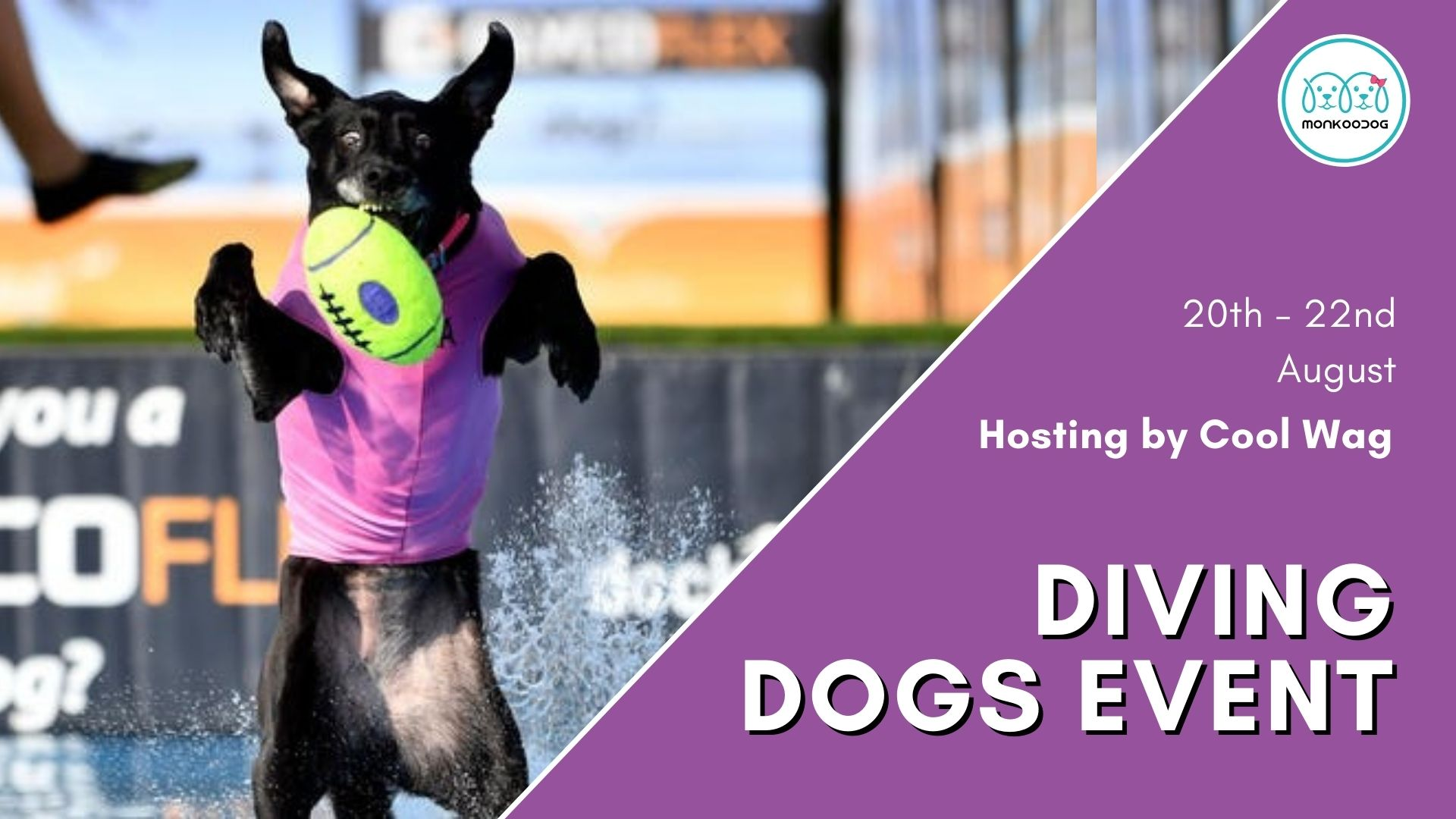 CoolWag Diving Dogs August Qualifier!!