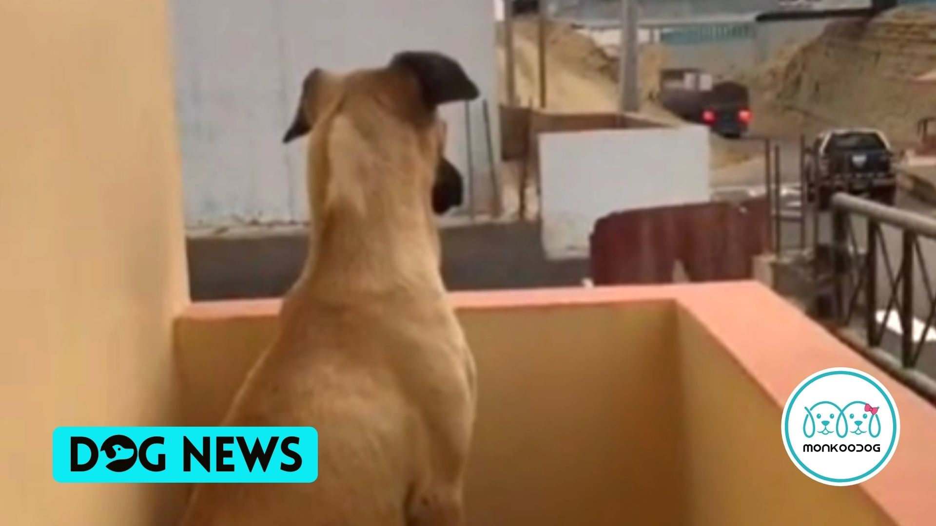 Dog portrays his unconditional devotion, awaiting his owner's return every day. Watch the viral video