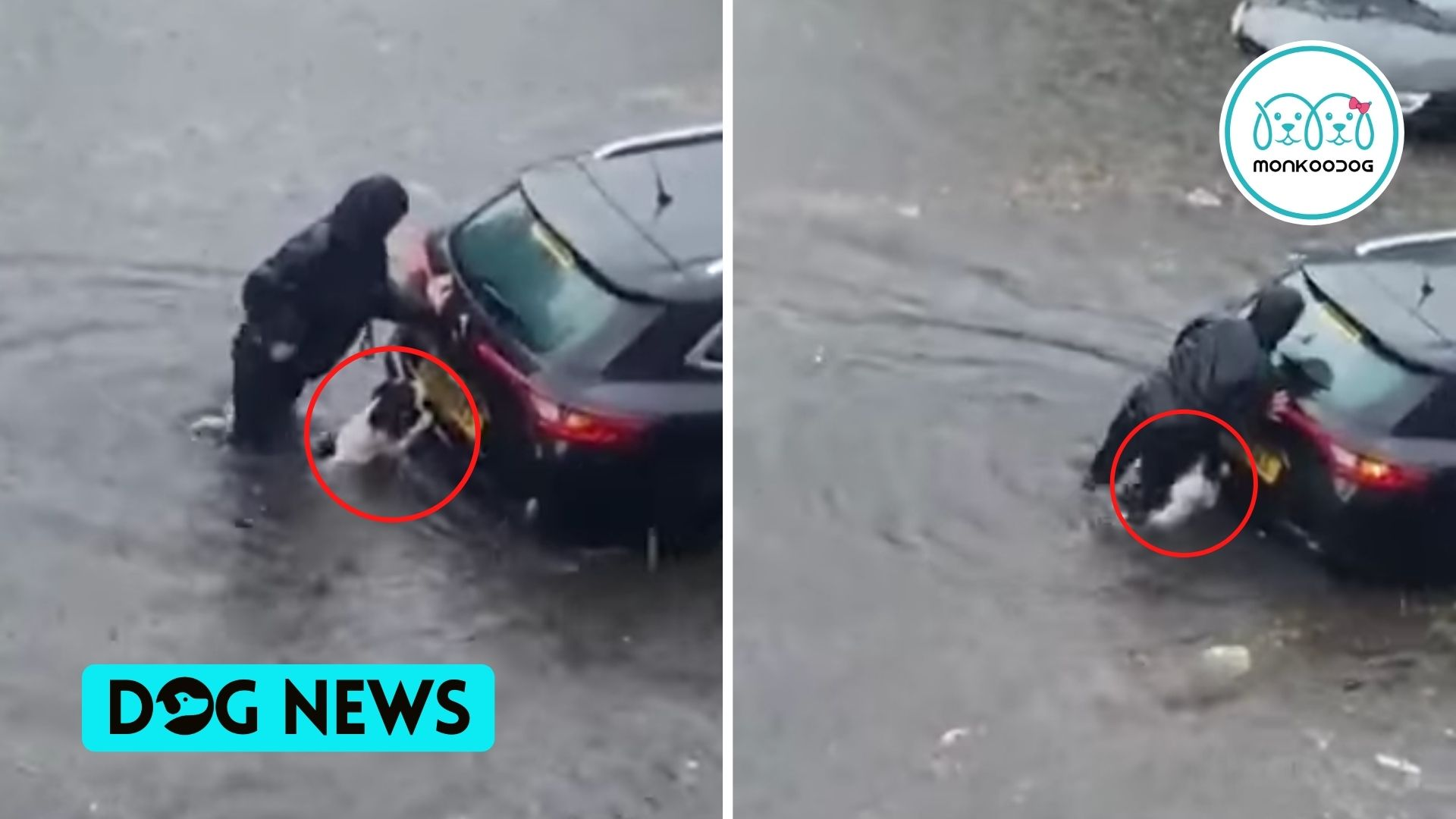 Dog to the Rescue!! A Brave Dog Helps Owner Push Submerged Car Out Of Floodwaters in Glasgow, Scotland.