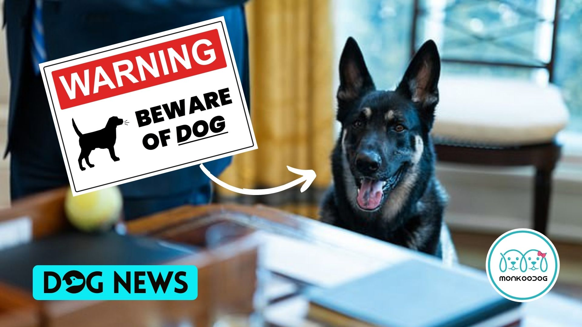 Email revealed Joe Biden's dog, Major, bit some Secret Service Agents repeatedly 8 days in a row.